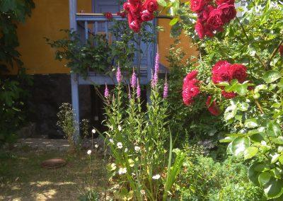 Bornholm Ronne ogród cz. 2