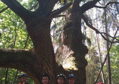 Mazury i nasze tajemnicze drzewo